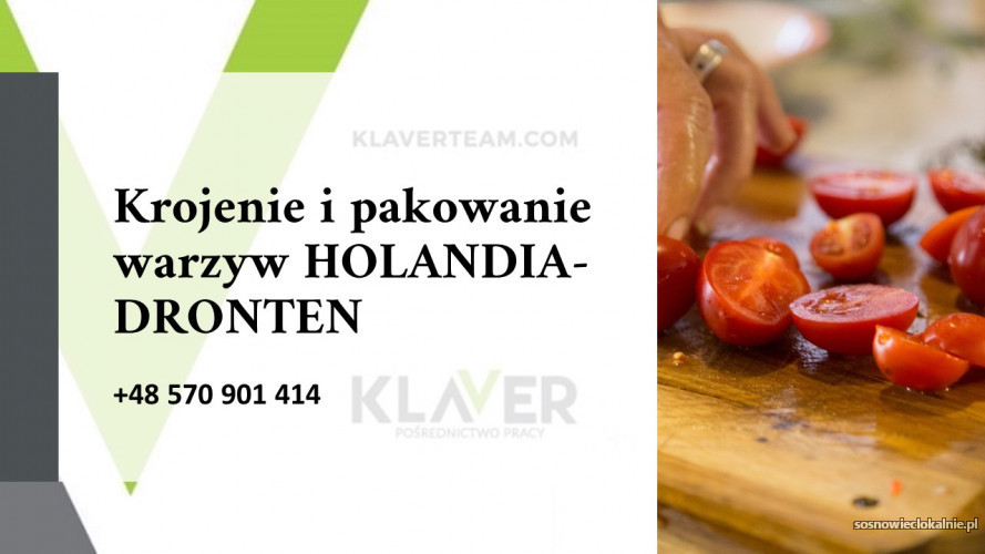 SAŁATKI obiadowe produkcja, krojenie i pakownie warzyw praca w  - Holandia !!
